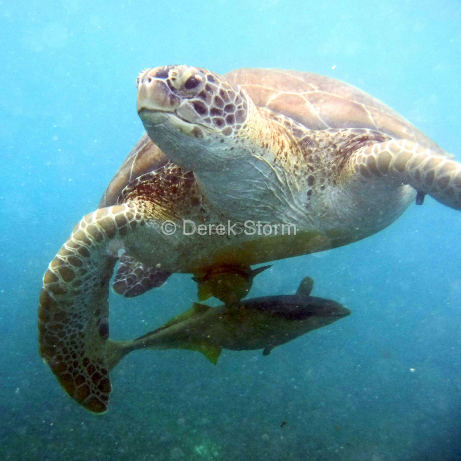 Akumal-Turtle_01101602