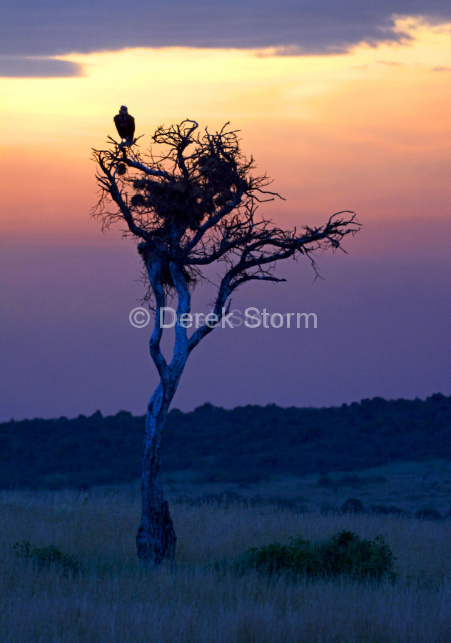 Vulture_15x12