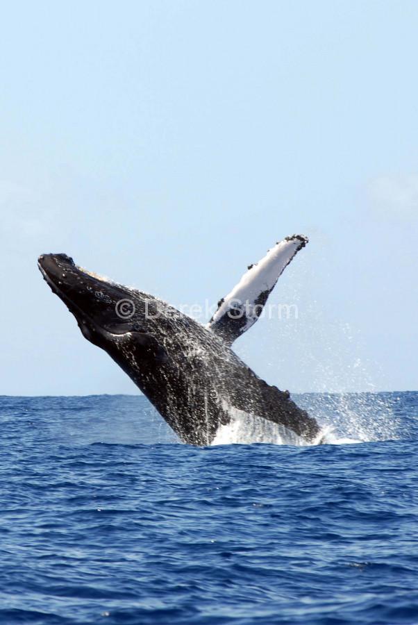 Whale-16i