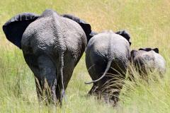 Elephant_6x6