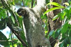 Sloth_8x10
